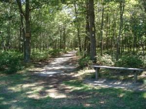 A shot from the Nassau-Suffolk Greenbelt Mountain Bike Trail