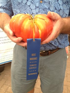 Closeup of 2013 winner Gary Schaffer for heaviest tomato: 3.01 lbs.