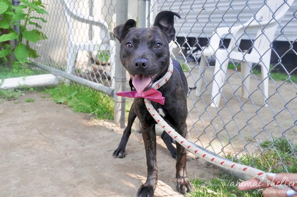PETS_Adoption_071814A