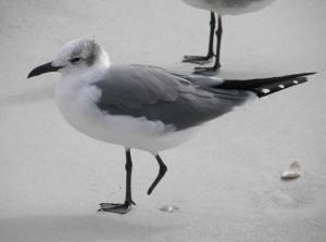 BirdColumn_092614A