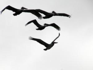 BirdColumn_011615B