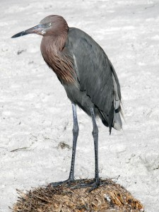 BirdColumn_012315A