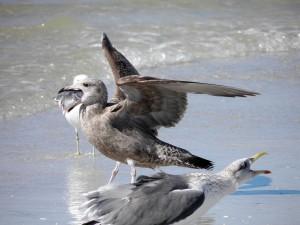 BirdColumn_013015A