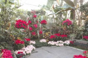 PlantingParadise_011415_B