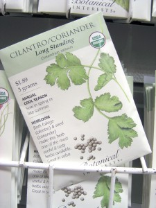 The number one herb this season is cilantro, leaves of the coriander plant. (Photo courtesy of Martin Viette Nurseries)