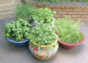 Herb container gardens (Photo courtesy of Renee's Garden)