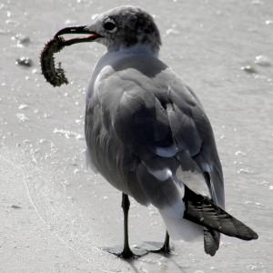 BirdColumn_032715B