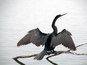 BirdColumn_042915A