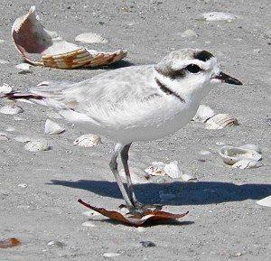 BirdColumn_042915B