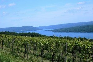 Some of the vineyards you'll find in the Finger Lakes region.