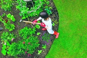 Weeding Garden Flower Bed with Hoe