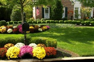 Create amazing fall curb appeal with chrysanthemums.