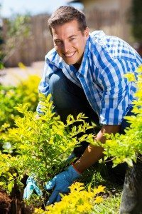 Fall is the best time to plant trees and shrubs.