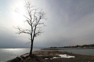 solitary-tree-416216_1920
