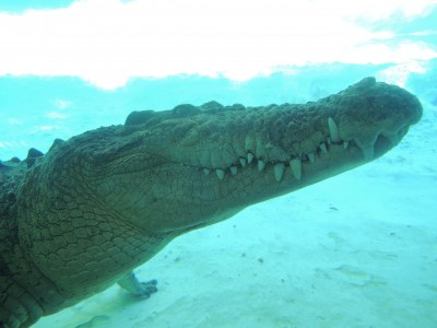 AlligatorFarm_010615B