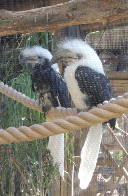 A white-crowned hornbill is one of the many aviary species you'll see here.