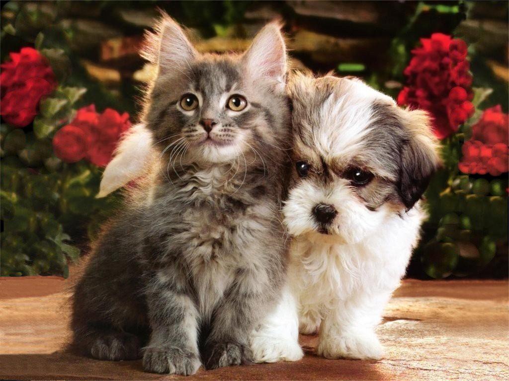 Kittens & Puppies 08_05_ccnan