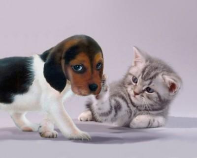 kitten_and_puppy_by_knightadz