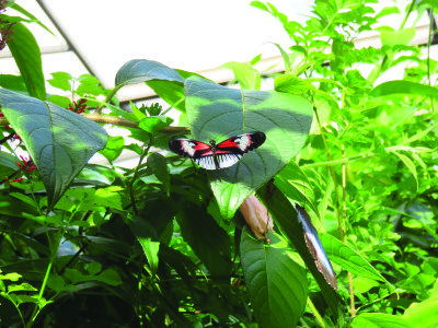 Family activities southern Florida When entering Butterfly World, the serene classical music, tropical setting and colorful butterflies set the mood for a relaxing experience.