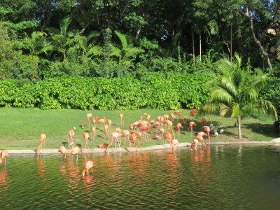 Family activities southern Florida At Jungle Island, visitors can see and touch many different types of animals.