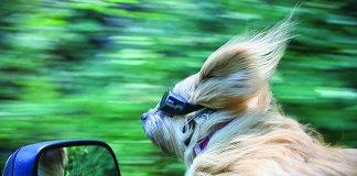 Pet Car Sickness