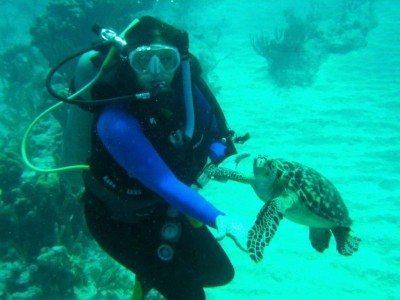 Maureen Hauser turtle
