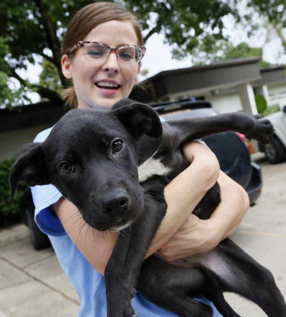 Jillian Sergio of the Companion Animal Alliance comforts Neville Wednesday, Aug. 17, 2016 in Baton Rouge, La. SPCA of Texas took over 50 dogs from the Companion Animal Alliance shelter in Baton Rouge to make more room in the aftermath of the floods. The dogs were transported to a shelter in Dallas. (Jonathan Bachman/AP Images for The Humane Society of the United States)
