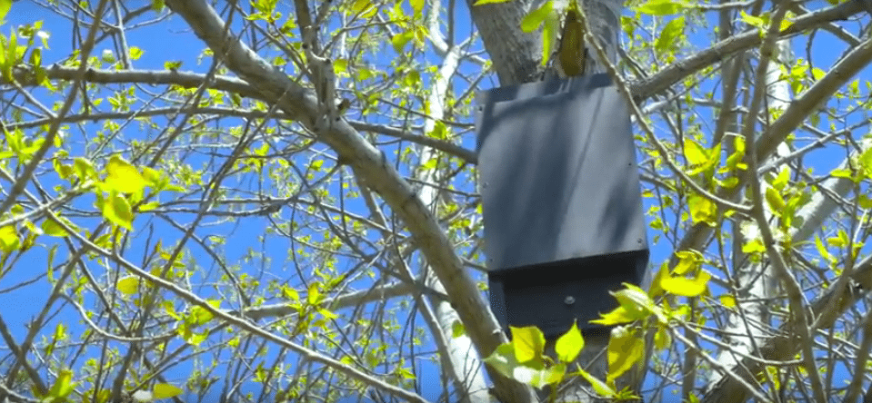 A bat house in tree on the north shore of Long Island.