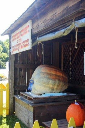 Guess the weight of the giant pumpkin Long Island Fair Gallery Photo by Kimberly Dijkstra