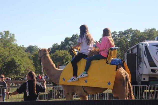Camel ride Long Island Fair Gallery Photo by Kimberly Dijkstra