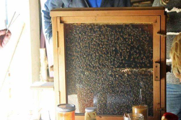 Honey bees Long Island Fair Gallery Photo by Kimberly Dijkstra