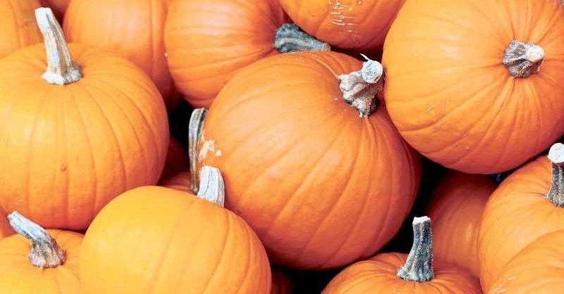 Pumpkins_A
