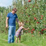 harbes09092012-Orchard075-300x250
