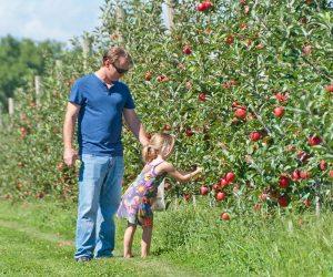 Best Fruit Picking Farms In Long Island