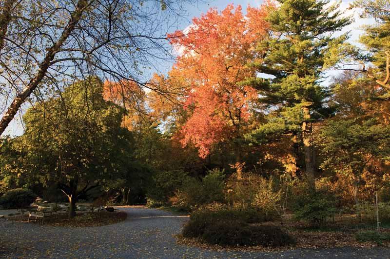 Planting Fields Arboretum where to view fall foliage Long Island