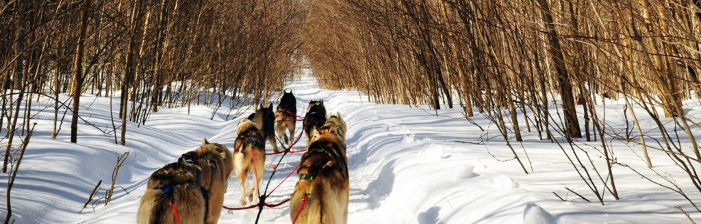 dog-sledding-stowe