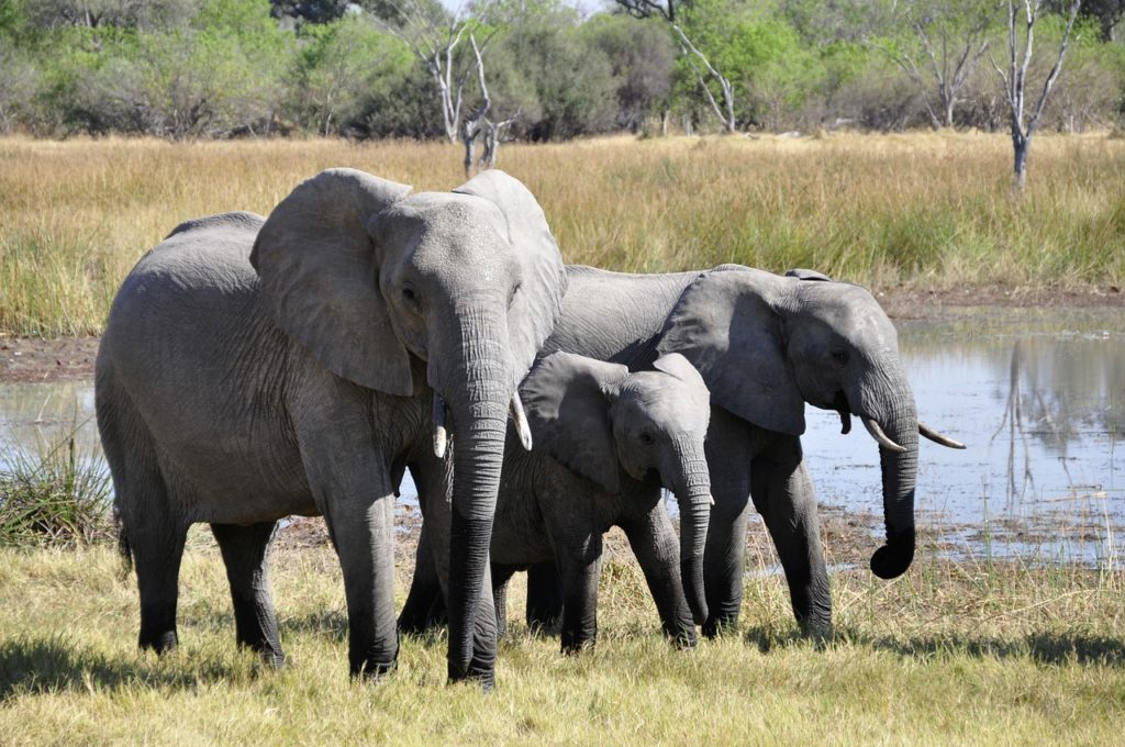 NY To Destroy More Than One Ton Of Illegal Ivory In Central Park