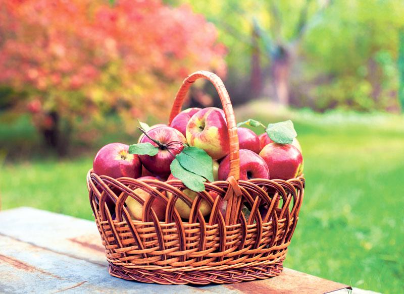 How 'Bout Dem Apples?