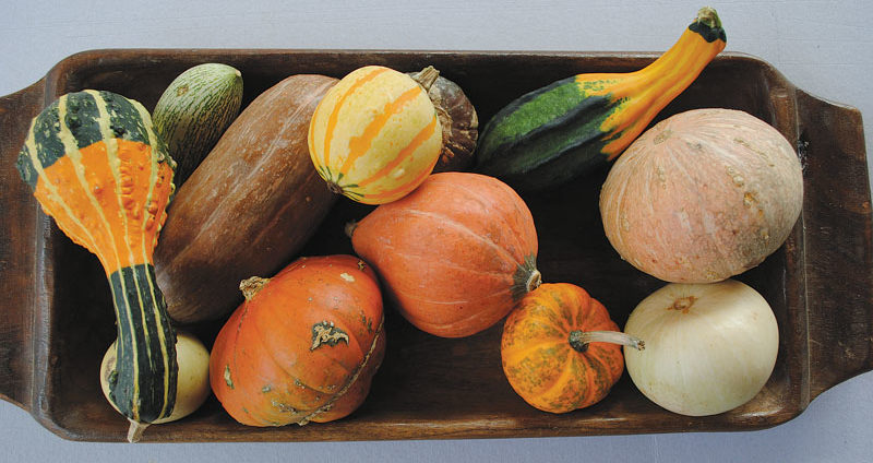 difference between a gourd and a squash