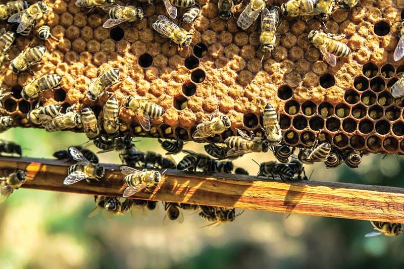 bees on a honey comb hive