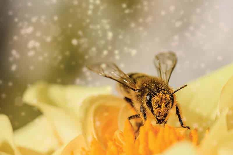 Bee on flower with pollen